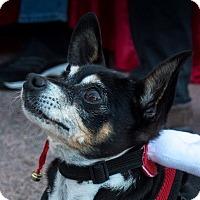 Adopt A Pet :: Petey - San Marcos, CA