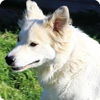 Adopt A Pet :: Houdini - Kyle, TX