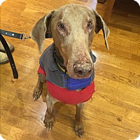 Adopt A Pet :: Mo - New Richmond, OH