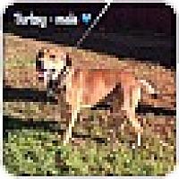 Adopt A Pet :: Turkey (Pom) - Plainfield, CT
