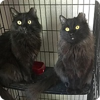 Adopt A Pet :: Freddie and Jason - Webster, MA