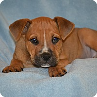Adopt A Pet :: Clyde - Albemarle, NC