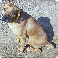 Adopt A Pet :: Pistol Pete - Hayden, AL
