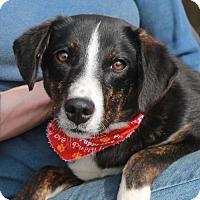 Adopt A Pet :: Jessie-PENDING - Garfield Heights, OH