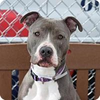 Adopt A Pet :: HARLEY - Brooklyn, NY