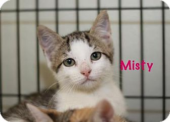 Domestic Shorthair Kitten for adoption in Baton Rouge, Louisiana - Misty