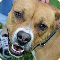 Adopt A Pet :: Frasier - Troy, MI