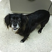 Adopt A Pet :: Lady - Davie, FL