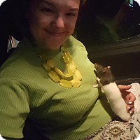 Adopt A Pet :: Nova - Aurora, IL