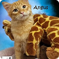 Adopt A Pet :: Angus - Albuquerque, NM