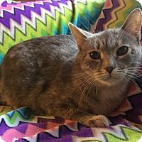 Adopt A Pet :: Bippity Boo - Addison, IL
