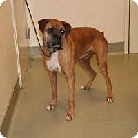 Adopt A Pet :: Blaze - Wildomar, CA