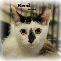 Adopt A Pet :: Reed - Springfield, PA