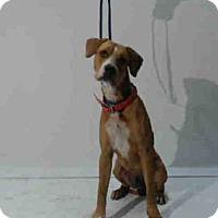 Adopt A Pet :: OPIE - Orlando, FL