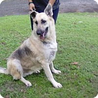 Adopt A Pet :: Ace - Palm Harbor, FL
