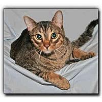 Adopt A Pet :: OJ - Howell, MI