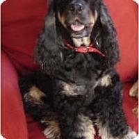 Adopt A Pet :: Zack - Tacoma, WA