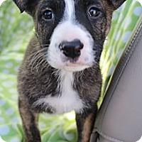 Adopt A Pet :: Tyson - Wytheville, VA