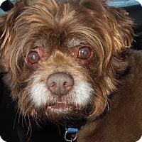 Adopt A Pet :: Teddy - Washington, PA