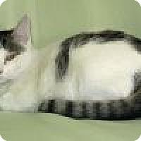Adopt A Pet :: Newton - Powell, OH