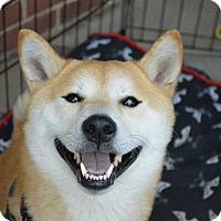 Adopt A Pet :: Ryo - Manassas, VA