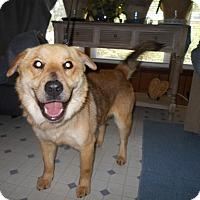 Adopt A Pet :: Quinn -sent to Virginia - Kannapolis, NC