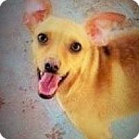 Adopt A Pet :: Tessa - Santa Ana, CA