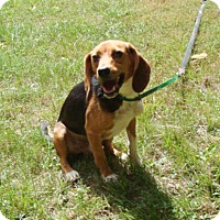 Adopt A Pet :: Goober - Dumfries, VA