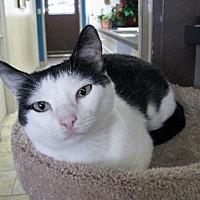 Adopt A Pet :: Cindy Lou - Polson, MT
