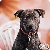 Adopt A Pet :: Wasabi - Portland, OR