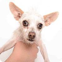 Adopt A Pet :: DAYSI - Murray, UT