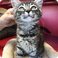 Adopt A Pet :: Jodi - Walnut Creek, CA