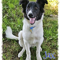 Adopt A Pet :: Jax - Shippenville, PA