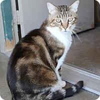 Adopt A Pet :: Moe - Lathrop, CA