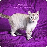 Adopt A Pet :: Primrose - $10 - Cincinnati, OH