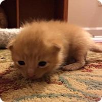 Adopt A Pet :: Joseph - Herndon, VA