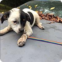 Adopt A Pet :: Jaffa - Hohenwald, TN