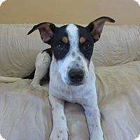 Adopt A Pet :: Huck - Ridgway, CO