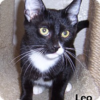 Adopt A Pet :: Leo - Oklahoma City, OK