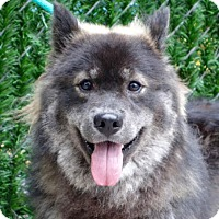 Adopt A Pet :: Ares Keesh - NYC, NY