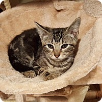 Adopt A Pet :: Samanthie - Long Beach, NY