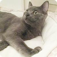 Adopt A Pet :: Winslow - North Highlands, CA