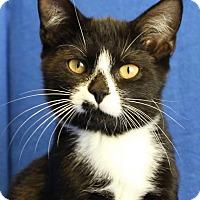 Adopt A Pet :: Pat - Winston-Salem, NC