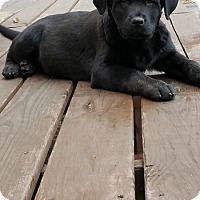 Adopt A Pet :: Raven - Bartonsville, PA