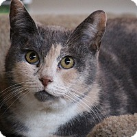 Adopt A Pet :: Oracle - Los Angeles, CA