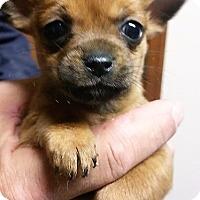 Adopt A Pet :: Whitby - Alexandria, VA