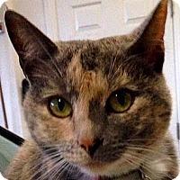 Adopt A Pet :: Pumi - Tiburon, CA