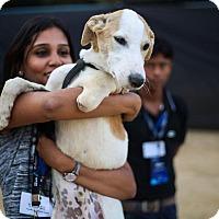 Adopt A Pet :: Gagan-Three legged IN pup - Monroe, NJ