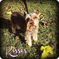 Adopt A Pet :: KISSES - Phoenix, AZ