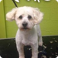Adopt A Pet :: Cole - Garden City, MI